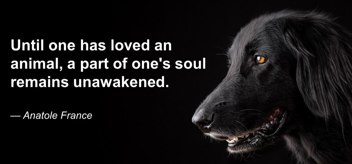 Pet Condolences